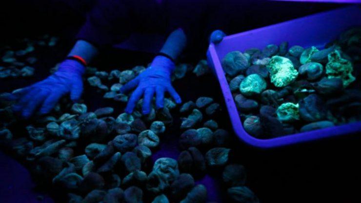 aflatoksinli incir ayıklama sortinf makinası